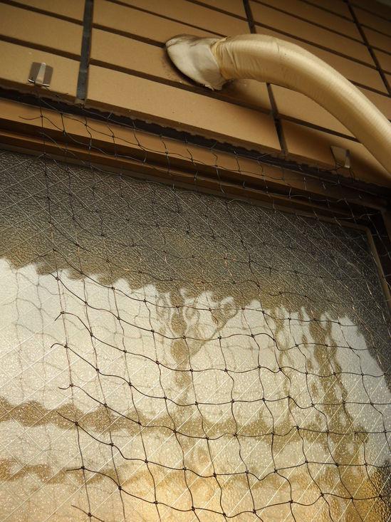 山口緑のカーテン②のサムネール画像