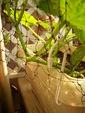 山口緑のカーテンのサムネール画像