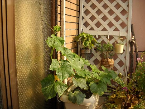山口緑のカーテン④のサムネール画像