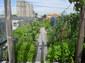 クルム菜園23.6.JPG