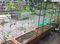 緑ソラマメ.jpg
